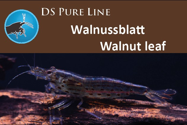 DS Pure Walnuss Garnelenfutter
