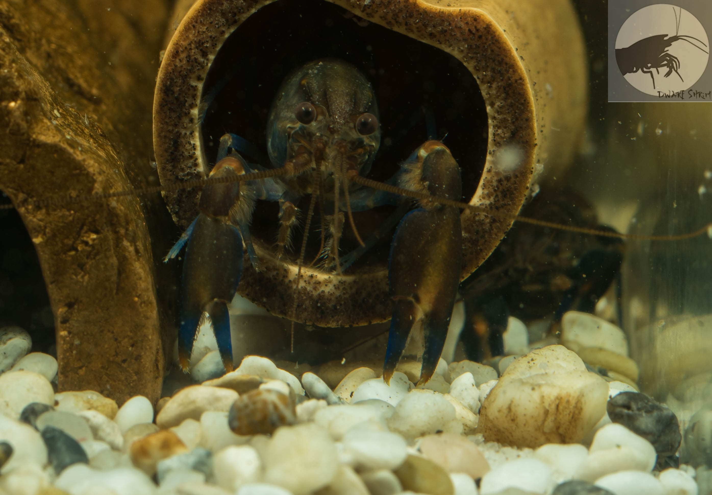 Krebshohle Fur Aquarien Flusskrebse Shrimp Shop